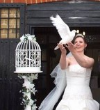 White Doves Essex, Wedding White Dove being released by Essex Bride