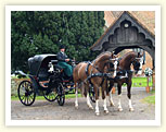 Wedding Horse and Carriage Essex.  Professional Horse and Carriage Hire.  Horse and Cart Rental Essex Weddings