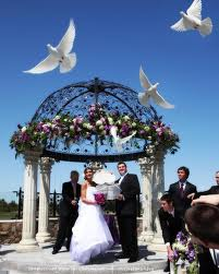 White Doves Essex, Wedding White Doves being released