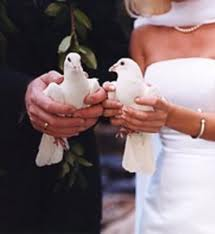 White Doves Essex,Wedding white doves